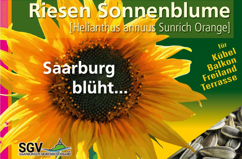 Wir suchen die höchste Sonnenblume!